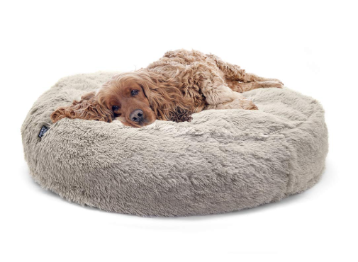 bed for old dog--twitch in sleep, train a puppy to sleep through the night