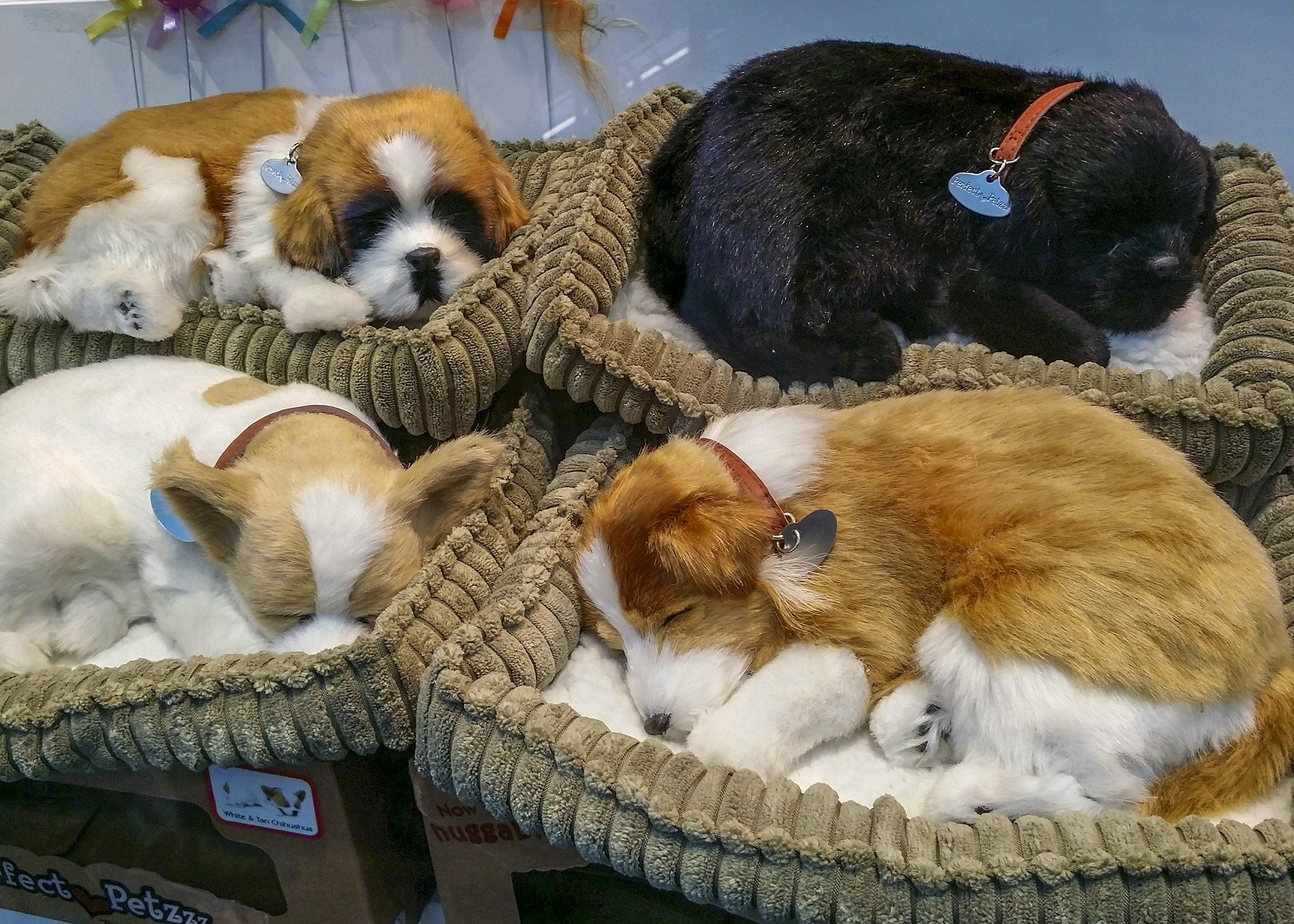 How to Care for Puppies-The Top 5 Tips On Caring for Puppies