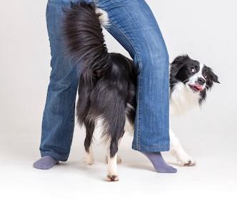 dog between my legs