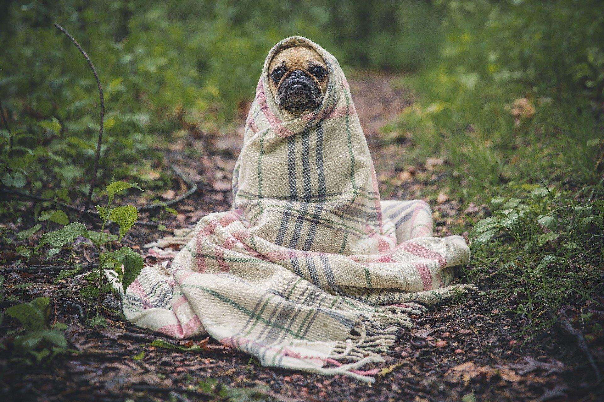 keeping dogs warm outside