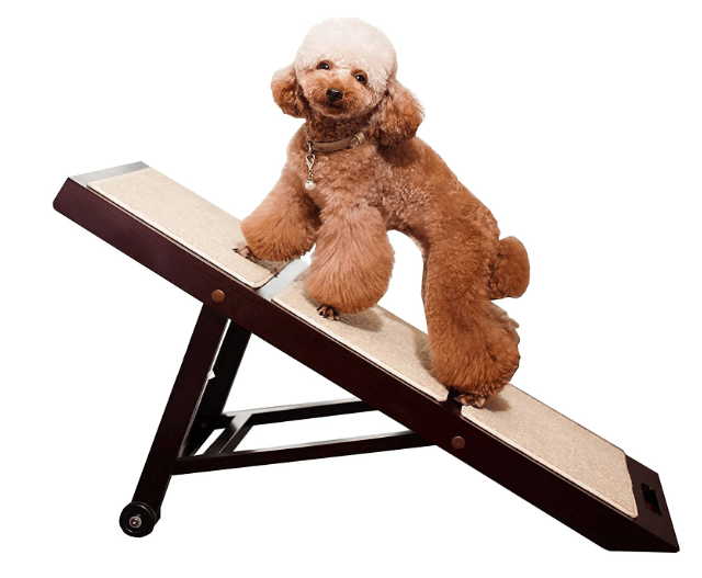 Best Dog Ramps for Sofa