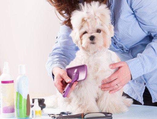 how often should i brush my dog?