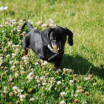 6 Tips for Potty Training a Stubborn Puppy