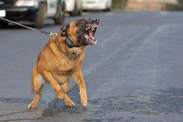 Dog/Human Aggression