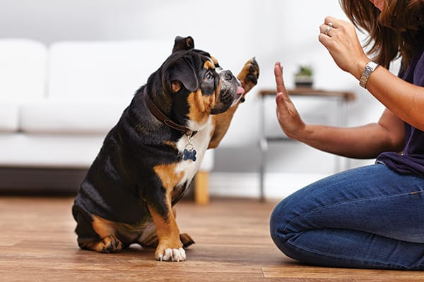 Introduction to Dog Training: 7 Most Popular Methods