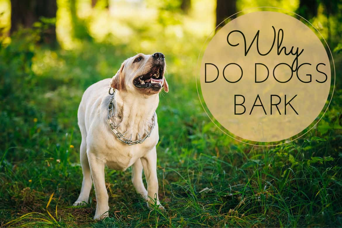 Why Dogs Bark: