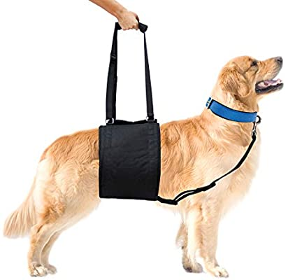 the best pet slings for large dogs