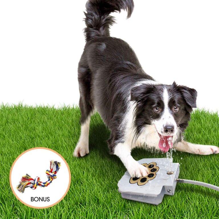 best outdoor dog water fountain