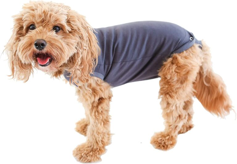what does a dog wear when it is hot?en