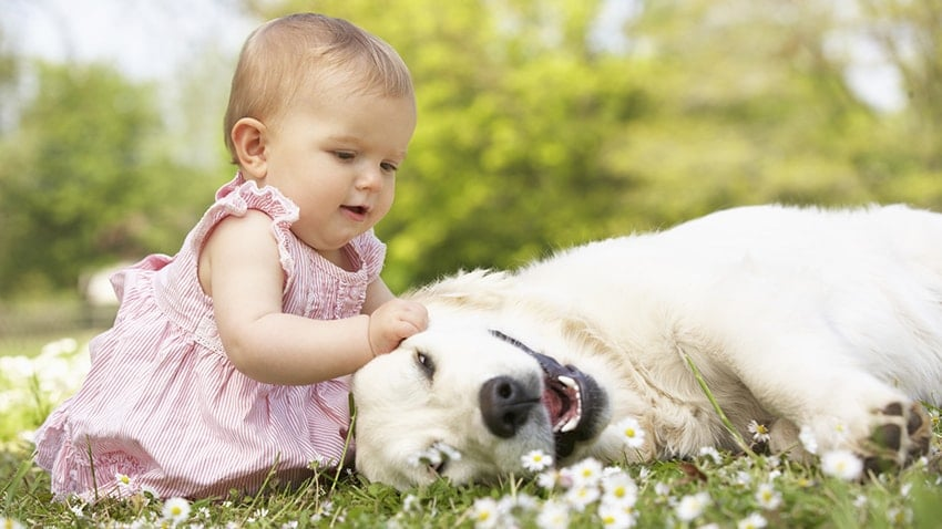 How to Prepare Your Dog for the Arrival of A New Baby